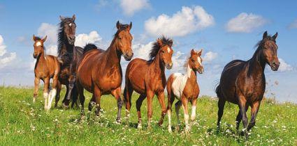 Лошади 400034