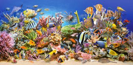 Подводный мир 400089